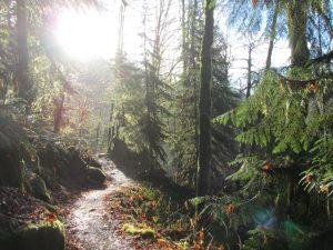 Baker Lake Guided Day Hike morning