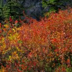 North Cascades Fall Photo Tours mountain fall colors