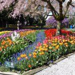 Skagit Valley Tulip Festival Guided Tour tulip garden