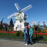 Skagit Valley Tulip Festival Guided Tour