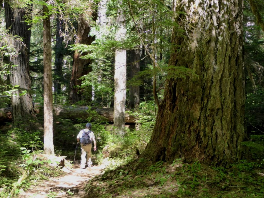 north cascades park tour hike