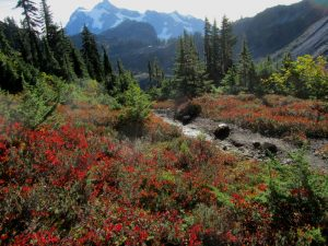 guided wildflower fall hikes - shuksan mt baker