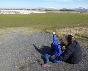 skagit family nature adventures birding