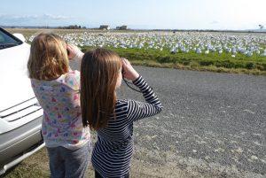 girl scouts skagit birding