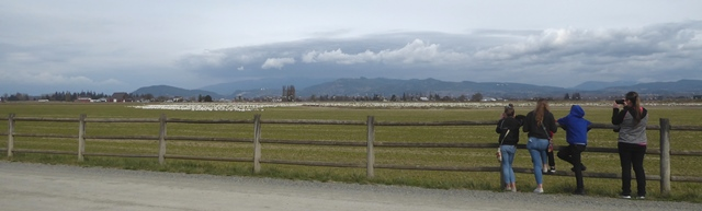 skagit valley geese family tour