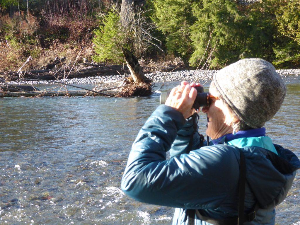 skagit eagles eco tour nooksack river nw washington